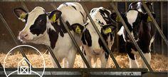 Uniek concept voor agrarische kinderopvang in Roosendaal!