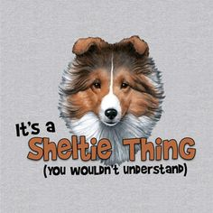 It's a Sheltie Thing