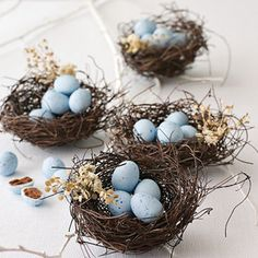 blue eggs in nests