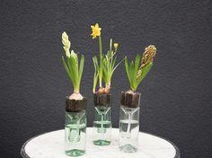 Tutorial fai da te: Come fare un vaso autoirrigante riciclando una bottiglia di vetro via DaWanda.com