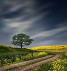 country landscape photography love my golden Landscape Photos, Landscape Art, Landscape Paintings, Landscape Photography, Nature Photography, Beautiful World, Beautiful Places, Beautiful Pictures, Nature Pictures