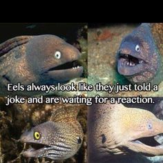 Having been fortunate enough to encounter eels while scuba diving, I can vouch for the facial expressions.