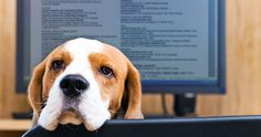 Dogs at the Office Isn't Crazy, It's Actually Healthy