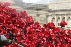 Weeping Window poppies at St Georges Hall. Flickr image by Lady Bracknell