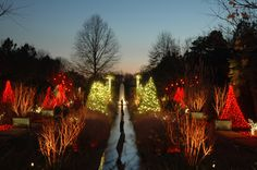 The lights at the Canal Garden allow guests to be surrounded by lights as their favorite holiday tunes play in the background during Holidays at the Garden 2014 at Daniel Stowe Botanical Garden.