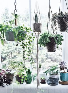 my scandinavian home: The Ultimate Guide to Indoor Hanging Plants