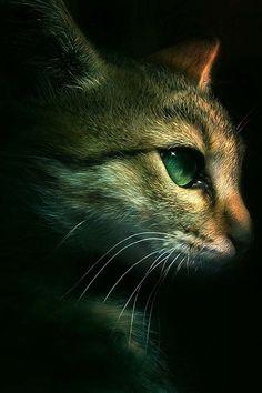 Nuestros amigos, los gatos.....