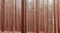 New free stock photo of nature forest pattern   Download it on Pexels