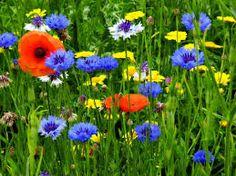 Bildergebnis für bloemen