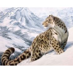 Painting Supplies Fashion Home Decor Canvas Paint By Number Kit Oil Painting Snow Leopard No Frame & Garden Snow Leopard Pictures, Animals And Pets, Cute Animals, Gato Grande, Painting Snow, Diy Painting, Leopard Animal, Leopard Wall, Paint By Number Kits