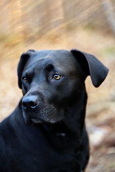 ᙢσŋ Ꮧɱį ʄɨɖèℓє (LuLu Dog Portrait by sheenamandaluff) Big Dogs, I Love Dogs, Dogs And Puppies, Cute Dogs, Doggies, Beautiful Dogs, Animals Beautiful, Cute Animals, Cesar Millan