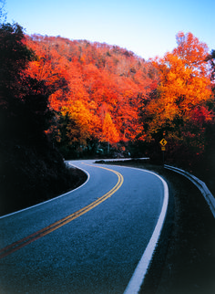 Chattahoochee National Forest Ride Via Georgia State Route 60  #motorcycles #roads