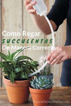 How to Water Succulents the Correct Way Plant Instructions How to Plant Potted Flowers How To Water Succulents, Growing Succulents, Succulent Gardening, Succulent Terrarium, Water Plants, Cacti And Succulents, Planting Succulents, Garden Plants, Watering Succulents