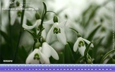 download calendars British Flowers, Calendar, Nature, Plants, Naturaleza, Life Planner, Plant, Nature Illustration, Off Grid