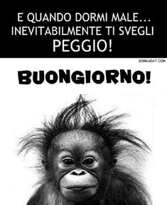 #ridere #bastardidentro #superghignate Good Morning Good Night, Good Morning Quotes, Good Mood, Vignettes, Monkey, Lyrics, Sayings, Animals, Edvard Munch