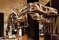 Dinosaurs!  At the Royal BC Museum May 17 - September 16.