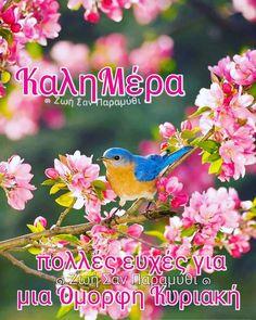 Ahhh >> Little Birds Movie Online All Birds, Cute Birds, Pretty Birds, Little Birds, Beautiful Birds, Animals Beautiful, Cute Animals, Pretty Flowers, Funny Bird