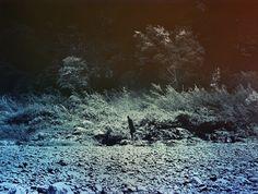 © DAISUKE YOKOTA - They -