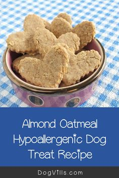 Looking for an easy hypoallergenic dog treat recipe that Spot will gobble up? Try our almond oatmeal cookies! Plus learn more about allergies in dogs! Dog Health Tips, Health And Wellness Quotes, Wellness Tips, Health And Nutrition, Easy Dog Treat Recipes, Dog Food Recipes, Carmel Recipe, Annorexia Tips, Hypoallergenic Dog Treats