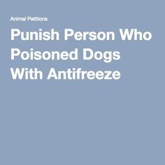 Punish Person Who Poisoned Dogs With Antifreeze