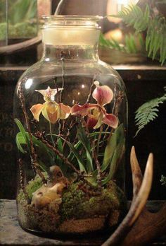 Mini ecosystem with succulents. Mason jars, cloche, vintage glass baby bottles are perfect to create a serene tablescape. Love this with orchids!