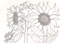 119556565080635547 also  on tuscan sunflower paintings