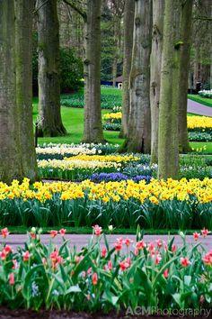 Keukenhof Spring Tulip Gardens, Lisse, The Netherlands