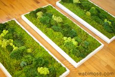 Clean white has a contemporary style in this moss wall art tryptic  www.wabimoss.com Moss Wall Art, Moss Art, Moss Graffiti, Flower Decorations, Driftwood, Contemporary Style, Indoor Plants, Terrarium, Greenery