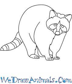 how to draw a cute possum