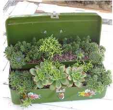 repurposed planter for succulents-this would be a beautiful accent in a garden. Cacti And Succulents, Planting Succulents, Planting Flowers, Flowers Garden, Cacti Garden, Silk Flowers, Old Tool Boxes, Cigar Boxes, Pinterest Garden