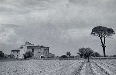 La Valencia desaparecida: Alquería del Pino Hermoso, también llamada del Pi....