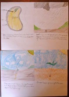 Waldorf ~ 3rd grade ~ Garden & Farming ~ Seeds ~ main lesson book