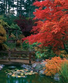 Fine Gardening - Enchanting Japanese Maples: Two experts pick their favorites based on color, shape Garden Garden backyard Garden design Garden ideas Garden plants Cool Landscapes, Beautiful Landscapes, Beautiful Gardens, Fine Gardening, Organic Gardening, Hydroponic Gardening, Gardening Tips, Asian Garden, My Secret Garden