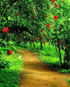 7 Resolute Cool Tricks: Garden Landscaping Decking Paths garden landscaping with stones driveways. Kerala Travel, Kerala Tourism, Small Garden Landscape, Landscape Design, Village Photos, Art Village, Village Photography, Kerala India, South India