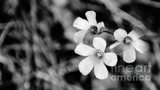 Floral Black And White by Andrea Anderegg