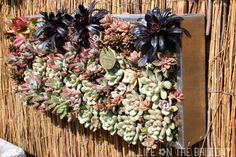 Roger's Gardens - Succulent Wall Art by Fern @ Life on the Balcony, via Flickr