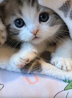 Cute Cats And Kittens Videos Hilarious Ragdoll Kittens, Cute Baby Cats, Cute Little Animals, Cute Cats And Kittens, Cute Funny Animals, Adorable Kittens, Funny Cats, Tabby Cats, Bengal Cats