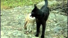Cat and owl playing - Fum & Gebra - Perfect friendship!, via YouTube.