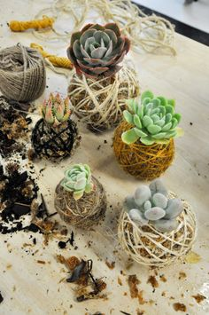 String Garden: DIY With Moss Kokedama succulent moss ball indoor garden DIY