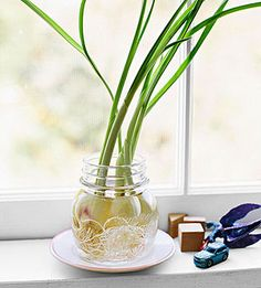 Tightly pack several peeled garlic cloves in a small container and cover them with water. Roots should appear within the first few days, then sprouts will emerge from the cloves' tops within a week.