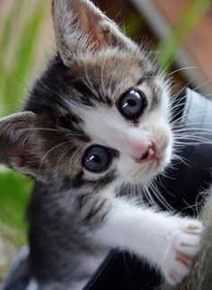 Awesome kitten! He looks like he's ready for action!