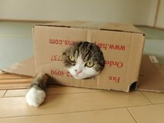 It's a cat in a box