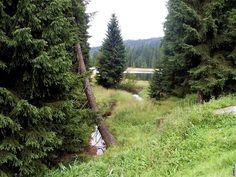 Jizerské hory. Přehrada Souš - blíž se k přehradě bohužel nedostaneme Country Roads, Plants, Pictures, Plant, Planets
