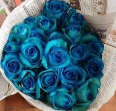 bunga-mawar-biru-hasil-osmosis