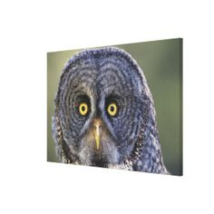 >>>Coupon Code          Owl 3 gallery wrap canvas           Owl 3 gallery wrap canvas lowest price for you. In addition you can compare price with another store and read helpful reviews. BuyDeals          Owl 3 gallery wrap canvas please follow the link to see fully reviews...Cleck Hot Deals >>> http://www.zazzle.com/owl_3_gallery_wrap_canvas-192353097475188149?rf=238627982471231924&zbar=1&tc=terrest