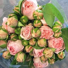 "New #cagrown garden spray rose! So new she's simply being called ""light pink"" ... Kinda lovin her... #florabundanceinc"