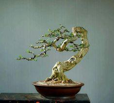 new ideas for small bonsai tree art