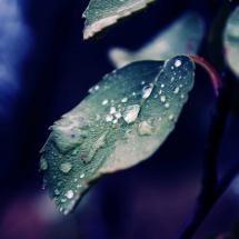 Morning-Dew-On-Leaves