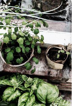 Plant your own #garden.