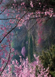 forest of pinks & greens....amazing!
